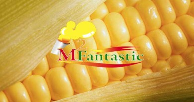 Supplier Jagung Manis