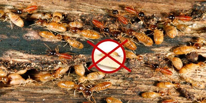 Jasa Anti Rayap, Layanan Perusahaan Pest Control