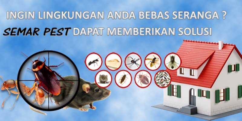 Perusahaan Pest Control